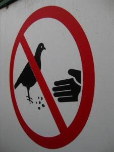 11-Interdit-nourrir-pigeons